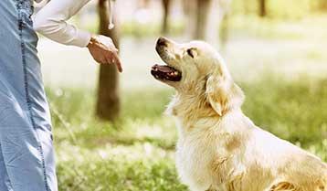 Dog Training Mission Tx